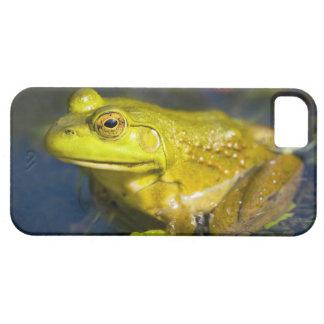 USA, New Jersey, Far Hills, Leonard J. Buck 6 iPhone 5 Covers