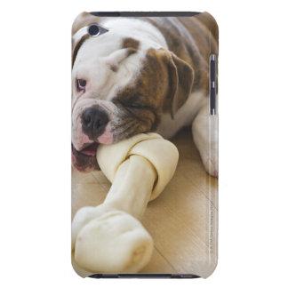 USA, New Jersey, Jersey City, Cute bulldog pup 2 iPod Touch Covers