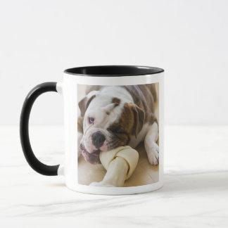 USA, New Jersey, Jersey City, Cute bulldog pup 2 Mug