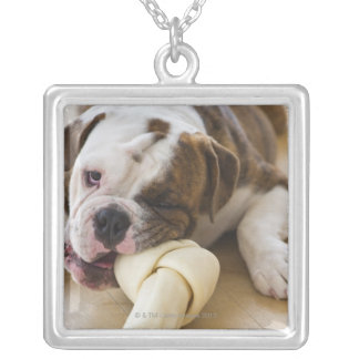 USA, New Jersey, Jersey City, Cute bulldog pup 2 Silver Plated Necklace