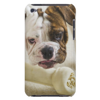 USA, New Jersey, Jersey City, Cute bulldog pup Case-Mate iPod Touch Case
