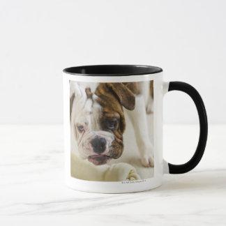 USA, New Jersey, Jersey City, Cute bulldog pup Mug
