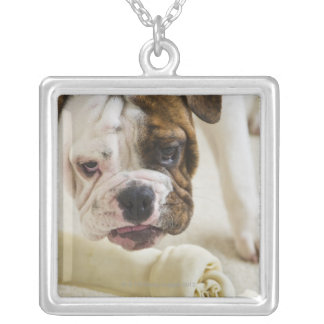 USA, New Jersey, Jersey City, Cute bulldog pup Silver Plated Necklace