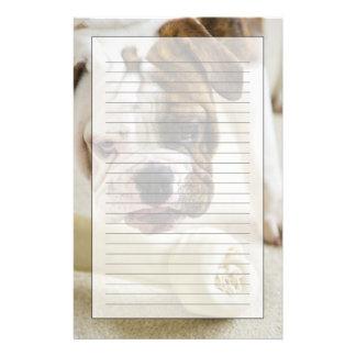 USA, New Jersey, Jersey City, Cute bulldog pup Stationery