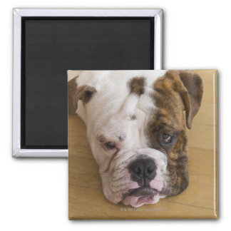 USA, New Jersey, Jersey City, Portrait of bored Square Magnet
