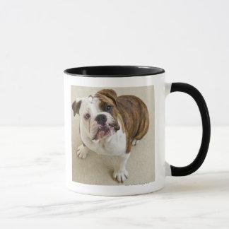 USA, New Jersey, Jersey City, Portrait of cute Mug