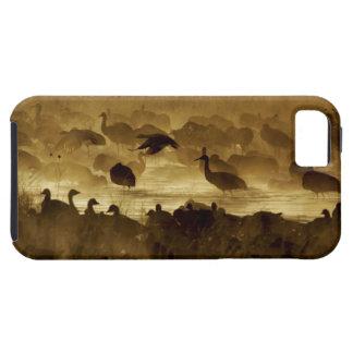 USA, New Mexico, Bosque del Apache National 2 iPhone 5 Cover