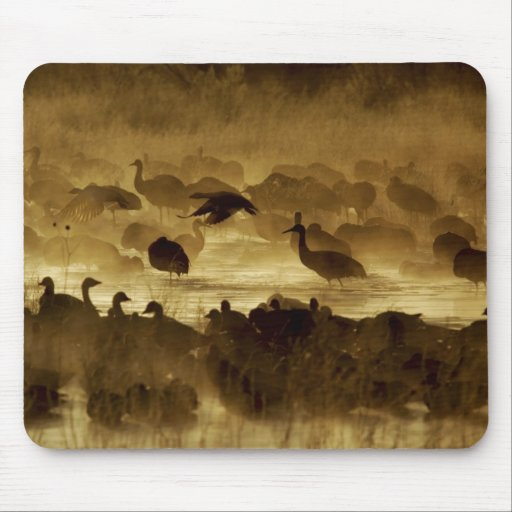 USA, New Mexico, Bosque del Apache National 2 Mouse Pads