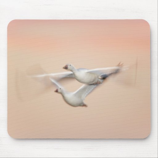USA, New Mexico, Bosque del Apache National 3 Mouse Pads
