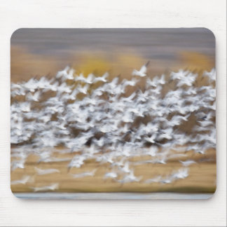 USA, New Mexico, Bosque del Apache National 3 Mouse Pad