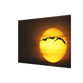 USA, New Mexico, Bosque del Apache National 4 Gallery Wrapped Canvas