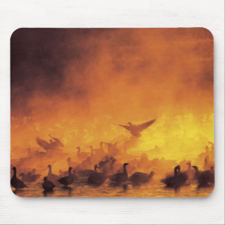 USA, New Mexico, Bosque del Apache National 7 Mouse Pad