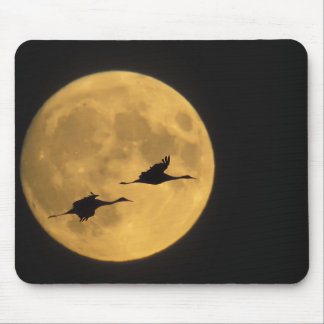 USA, New Mexico, Bosque del Apache National Mouse Mat