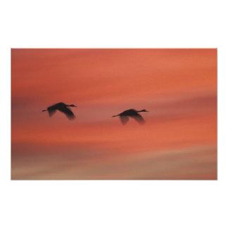 USA, New Mexico, Bosque del Apache Wildlife Photo Print