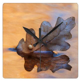 USA, New Mexico. Oak leaf in stream Clocks