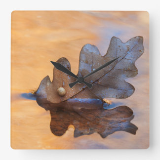 USA, New Mexico. Oak leaf in stream Square Wall Clock