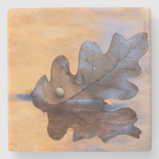 USA, New Mexico. Oak leaf in stream Stone Beverage Coaster