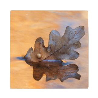 USA, New Mexico. Oak leaf in stream Wood Coaster
