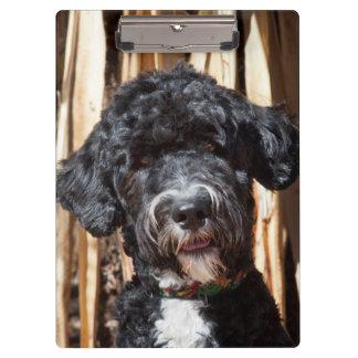 USA, New Mexico. Portuguese Water Dog Portrait Clipboard