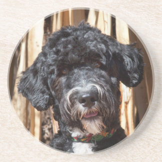 USA, New Mexico. Portuguese Water Dog Portrait Coaster