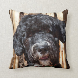 USA, New Mexico. Portuguese Water Dog Portrait Cushion
