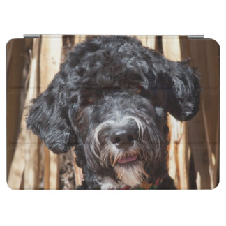 USA, New Mexico. Portuguese Water Dog Portrait iPad Air Cover