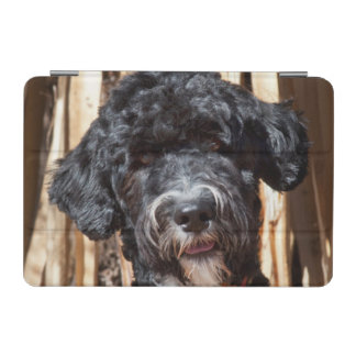 USA, New Mexico. Portuguese Water Dog Portrait iPad Mini Cover