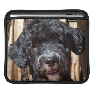 USA, New Mexico. Portuguese Water Dog Portrait iPad Sleeve