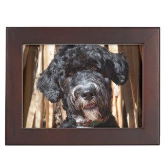 USA, New Mexico. Portuguese Water Dog Portrait Keepsake Box