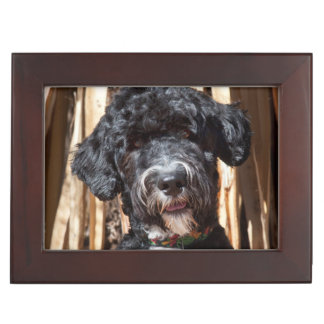 USA, New Mexico. Portuguese Water Dog Portrait Keepsake Boxes