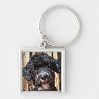 USA, New Mexico. Portuguese Water Dog Portrait Key Ring