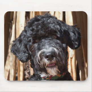 USA, New Mexico. Portuguese Water Dog Portrait Mouse Pad