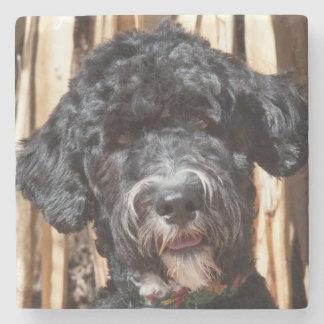 USA, New Mexico. Portuguese Water Dog Portrait Stone Coaster