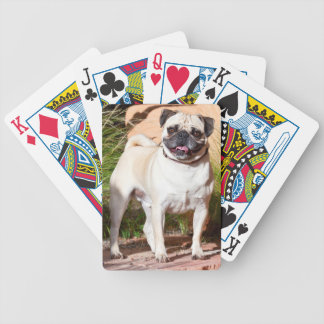 USA, New Mexico. Pug Standing In High Grasses Bicycle Playing Cards