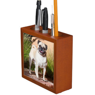 USA, New Mexico. Pug Standing In High Grasses Desk Organiser