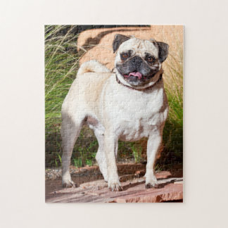 USA, New Mexico. Pug Standing In High Grasses Jigsaw Puzzle