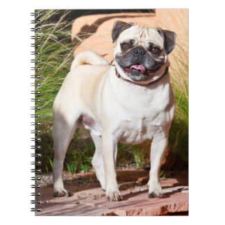 USA, New Mexico. Pug Standing In High Grasses Notebooks
