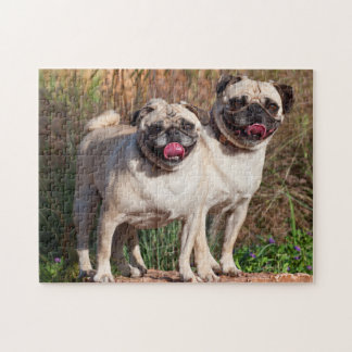 USA, New Mexico. Two Pugs Standing Together Jigsaw Puzzle