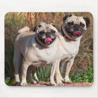 USA, New Mexico. Two Pugs Standing Together Mouse Mat