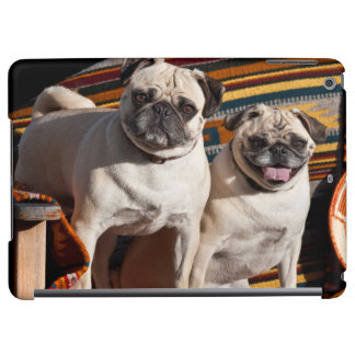 USA, New Mexico. Two Pugs Together