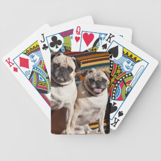 USA, New Mexico. Two Pugs Together Bicycle Playing Cards