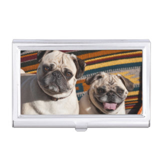 USA, New Mexico. Two Pugs Together Business Card Holder