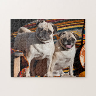 USA, New Mexico. Two Pugs Together Jigsaw Puzzle