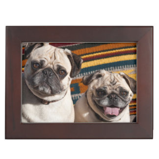 USA, New Mexico. Two Pugs Together Keepsake Box