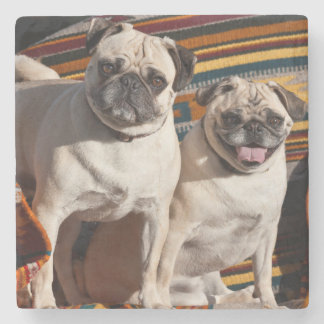 USA, New Mexico. Two Pugs Together Stone Coaster