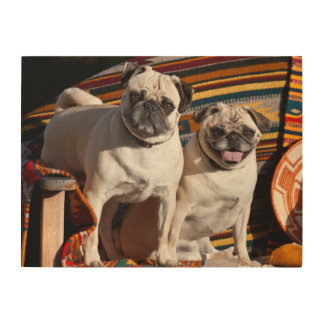 USA, New Mexico. Two Pugs Together Wood Wall Decor