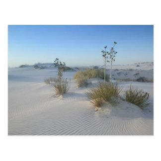 USA, New Mexico, White Sands National 2 Postcard