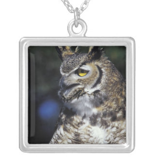 USA, New Mexico, Wildlife West Nature Park. Silver Plated Necklace