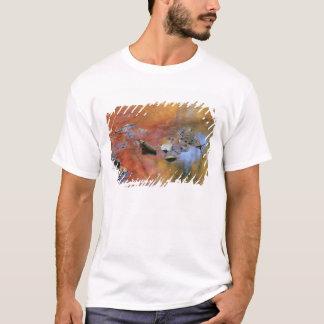 USA, New York, Adirondacks, Fallen Leaves in T-Shirt