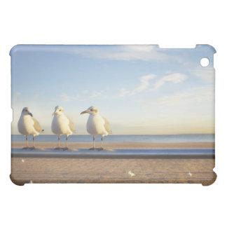 USA, New York City, Coney Island, three seagulls iPad Mini Covers